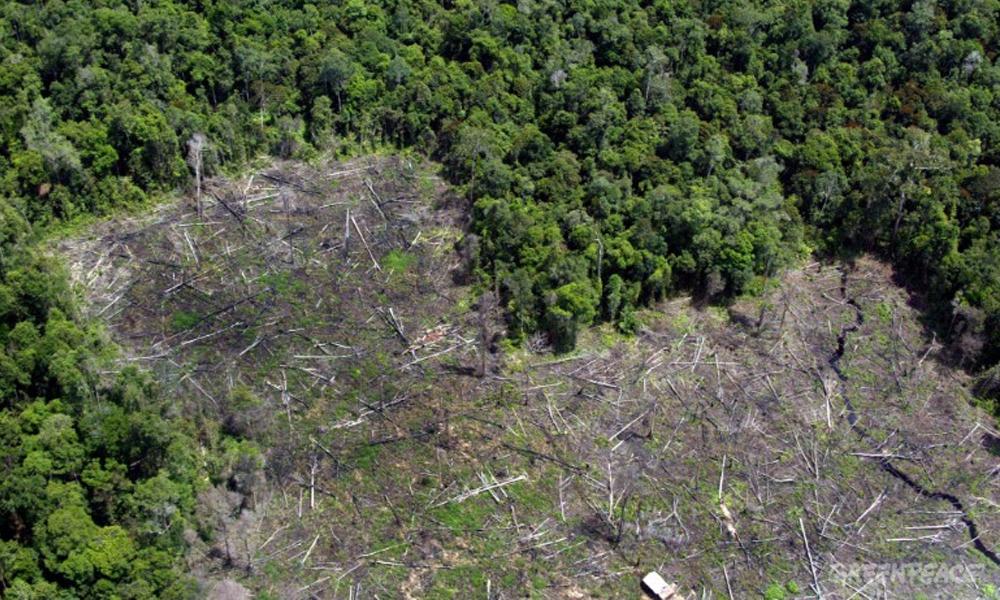 Global Forest Watch: una plataforma que permitirá controlar la deforestación en Paraguay