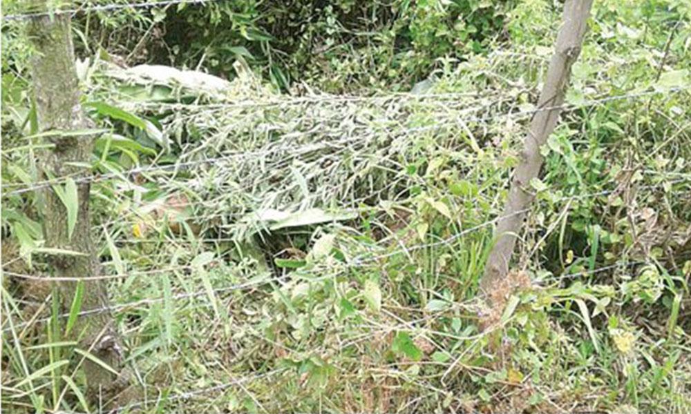 Crueldad. El cuerpo de la víctima estaba bajo ramas y hojas en una propiedad privada. Foto://Ultimahora.com