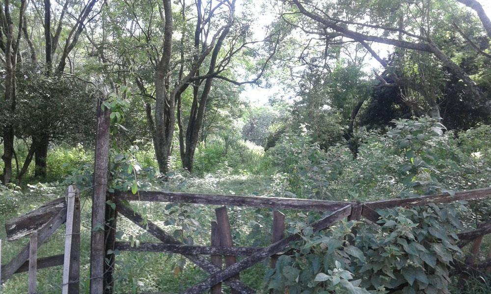 Terreno abandonado molesta a vecinos del barrio San Isidro de Coronel Oviedo
