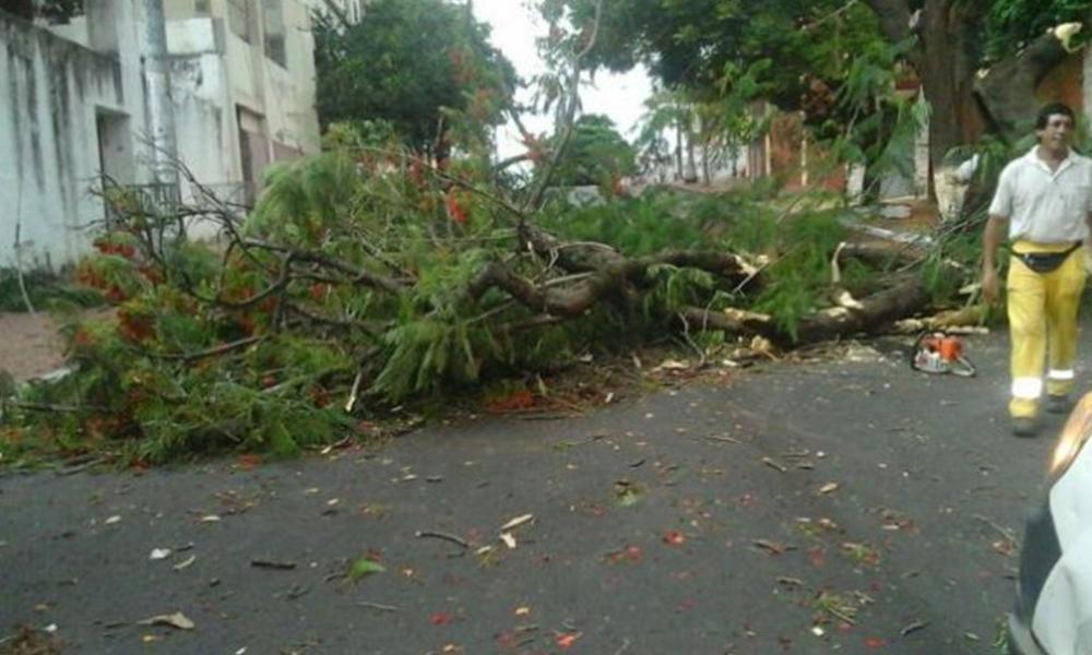 La Municipalidad sigue trabajando para despejar los espacios de los árboles caídos. Foto://Ultimahora.com