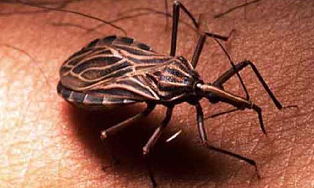 Paraguay logró evitar que esta enfermedad se propague.  Foto://ella.paraguay.com