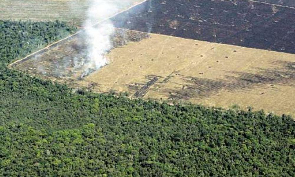 Masiva deforestación en el Chaco paraguayo. //ea.com.py