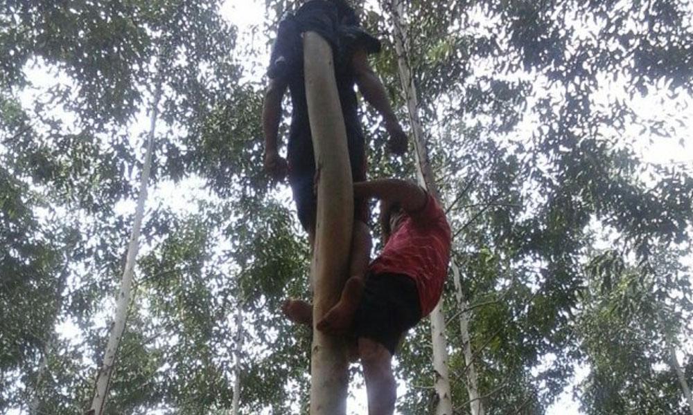 Misiones: Joven fue encontrado atado a un árbol