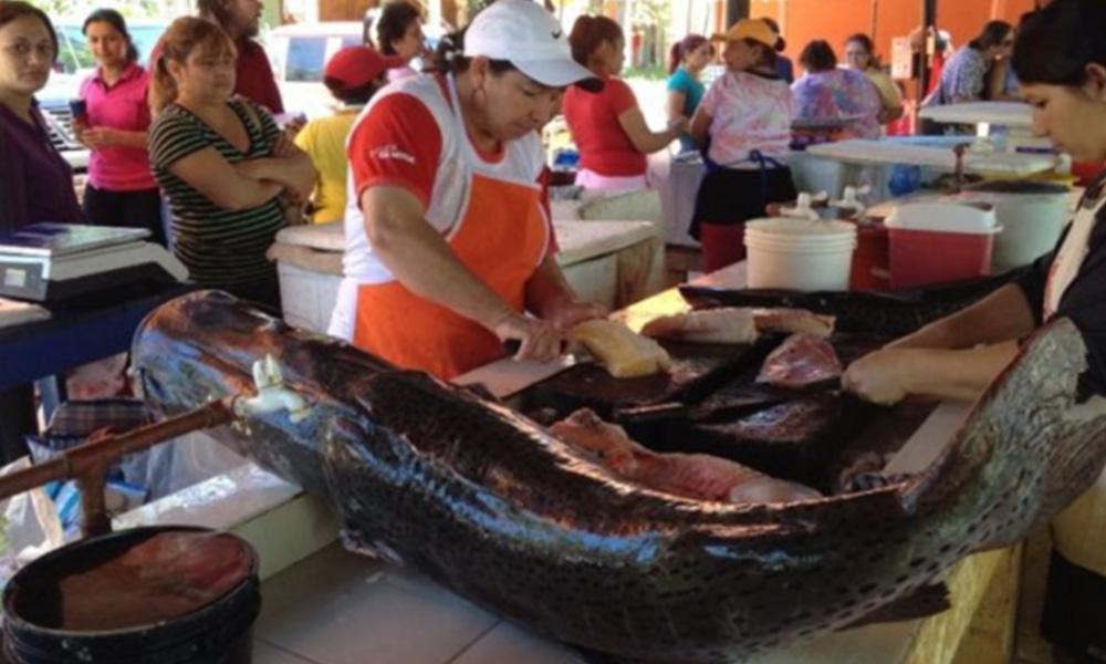 Veda pesquera inicia el 7 de noviembre