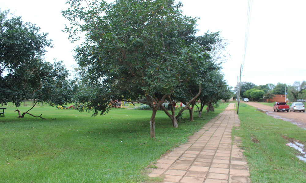 Derribar árboles para plantar ladrillos
