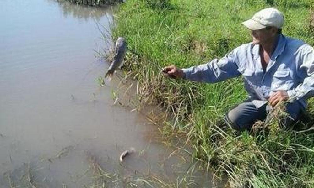Denuncian gran mortandad de peces en el río Tebicuary. //moopio.com