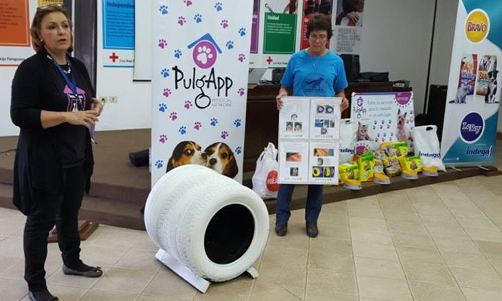 Iniciativa: minirefugios de cubiertas para perros callejeros