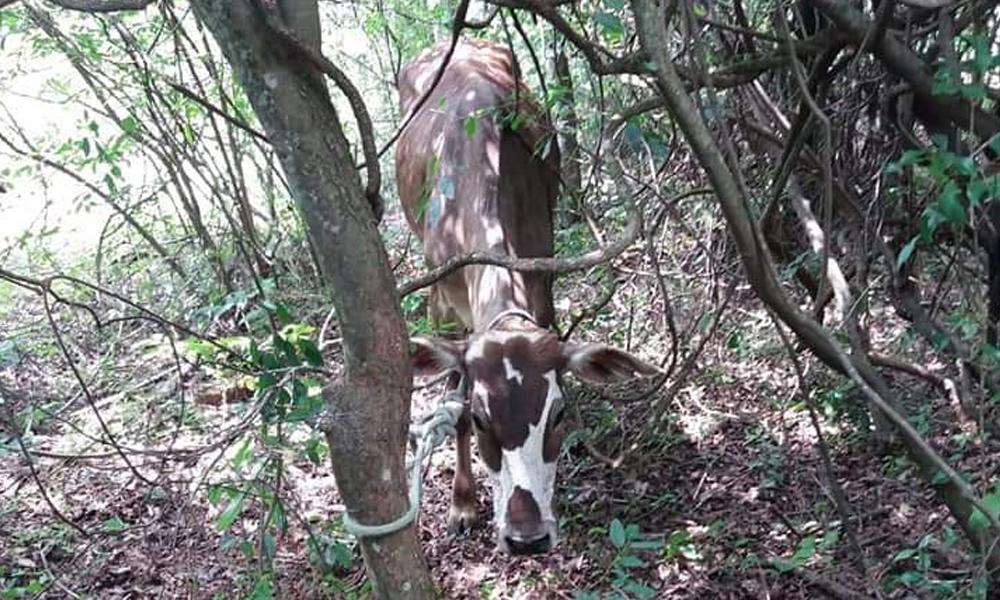 Recuperan animales hurtados en Escobar