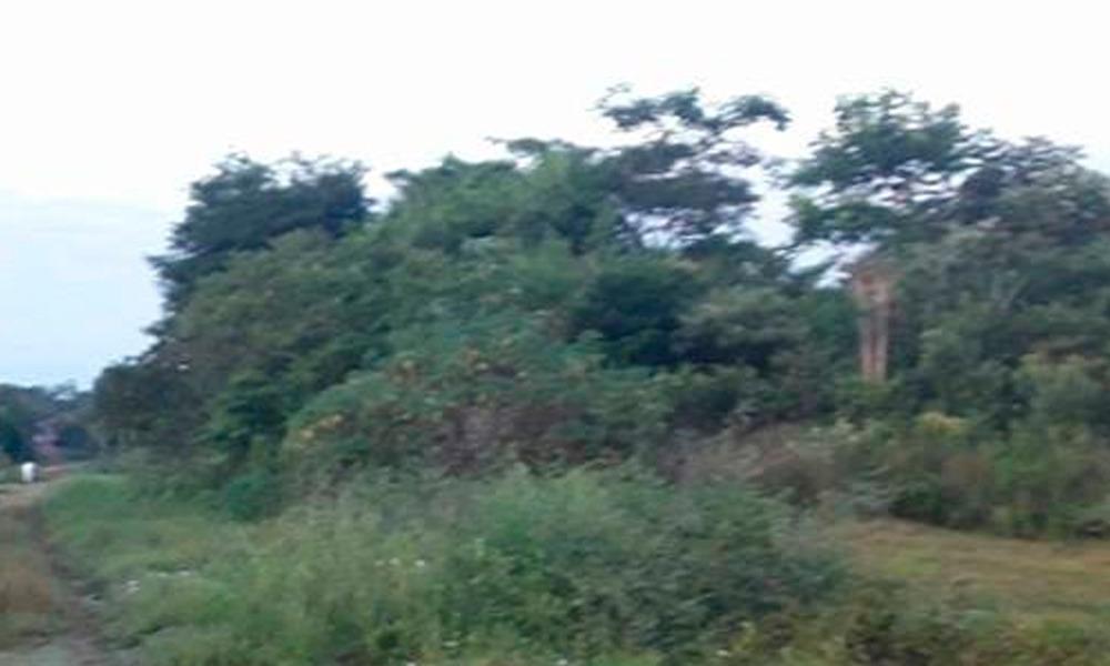 Terrenos baldíos generan preocupación en barrio San Isidro