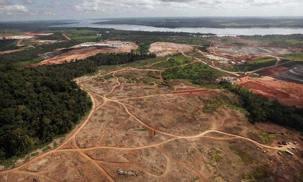 Imagen de una tala ilegal en la amazonía brasileña.  //ecoportal.net