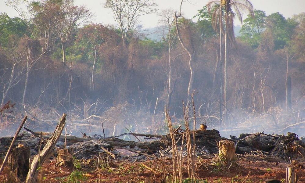 Bosque desmontado y quemado en el distrito de Raúl A. Oviedo // OviedoPress