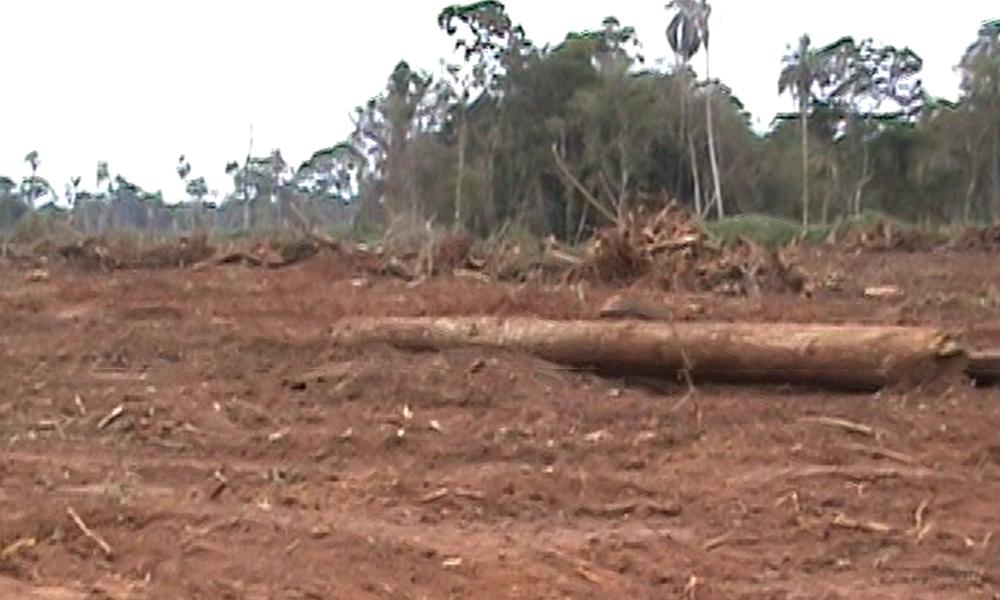 Según la denuncia, unas 400 hectáreas de las 2.500 adquiridas por los mennonitas, ya fueron desmontadas //Gentileza