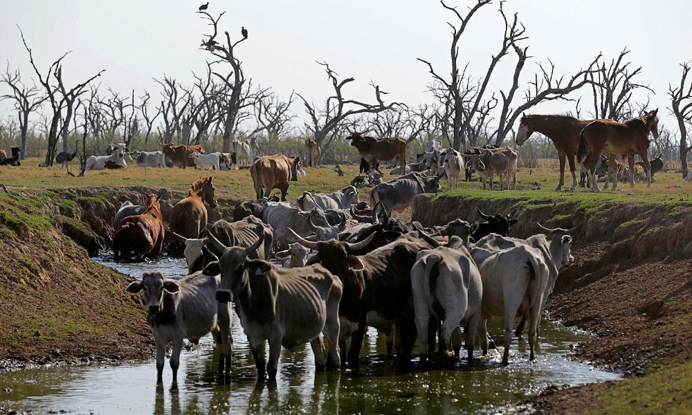 Integrantes de ONGs ambientalistas advierten por la inminencia de un desastre ecológico en el curso del agua del Río Pilcomayo.