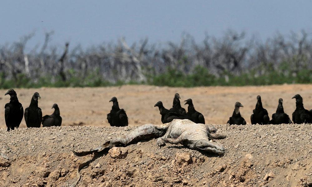 Es la peor sequía del Río Pilcomayo en los últimos 20 años.
