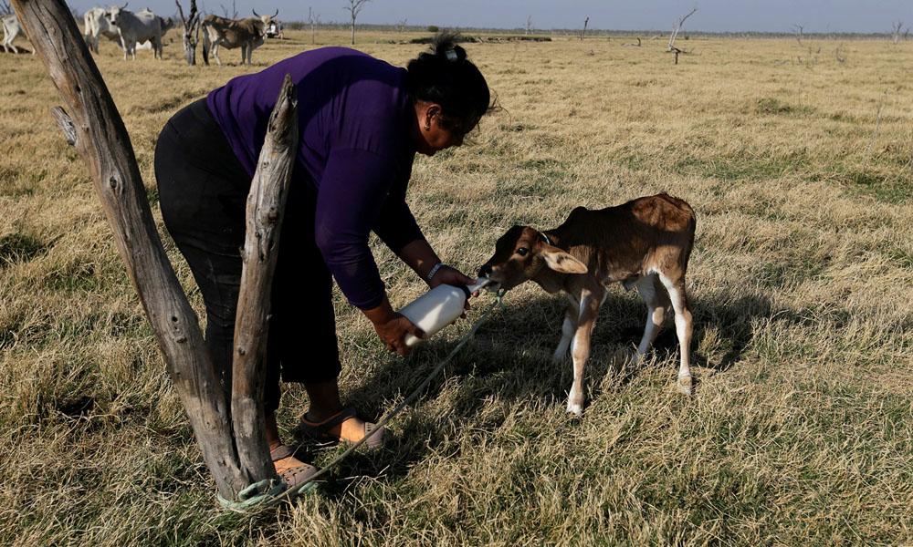 Integrantes de ONGs ambientalistas advierten por la inminencia de un desastre ecológico en el curso de agua.